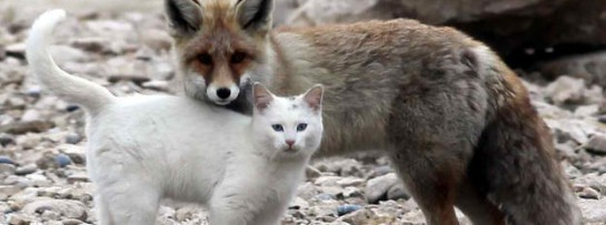 Fox and Cat
